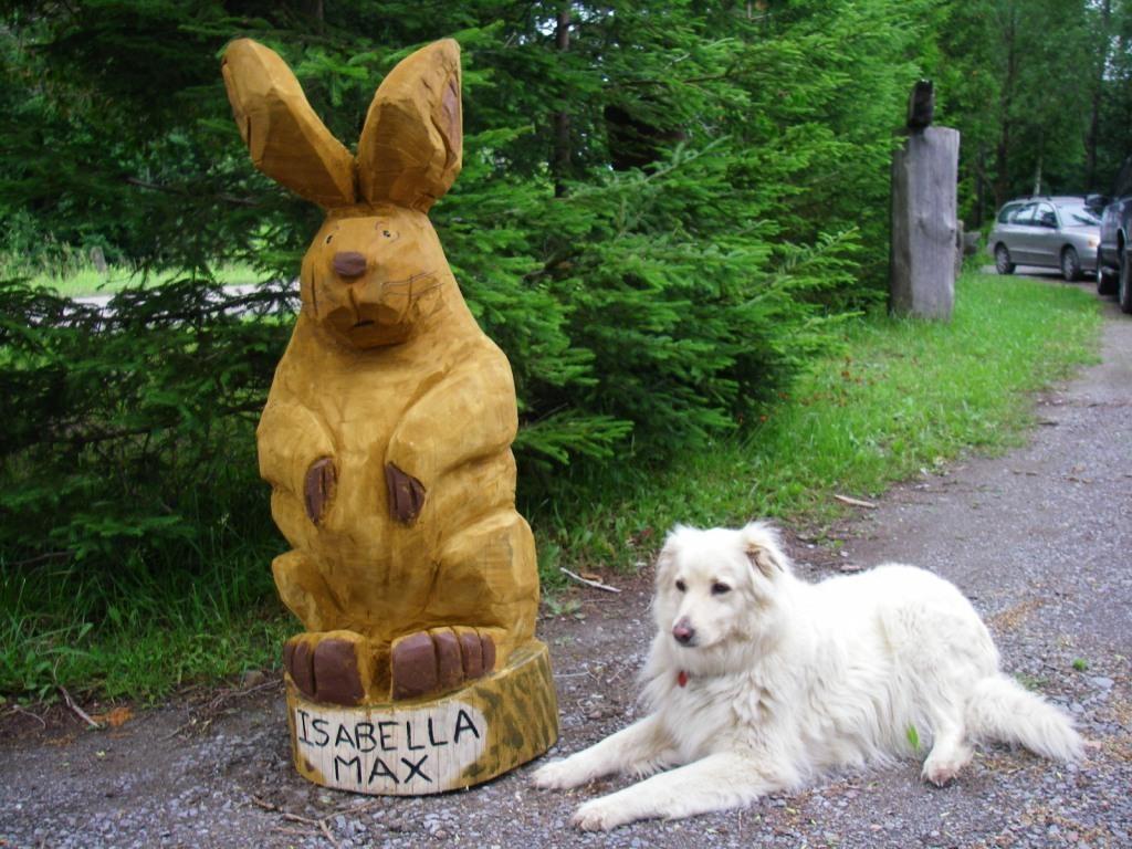 rabbit_w_dog